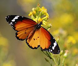 Anfahrt Schmetterling